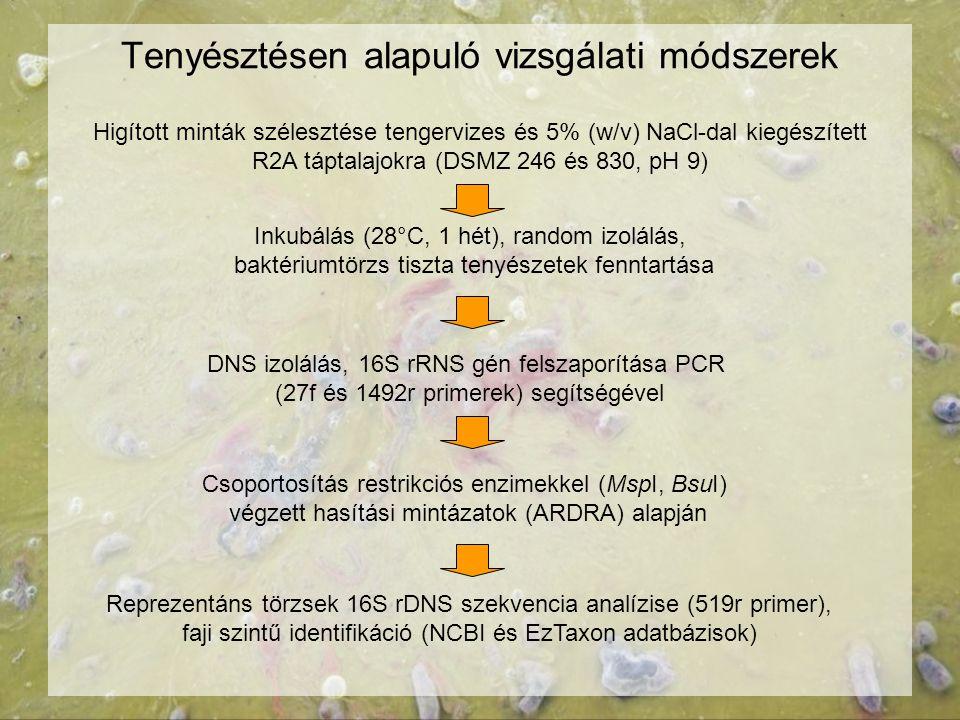 Tenyésztésen alapuló vizsgálati módszerek Higított minták szélesztése tengervizes és 5% (w/v) NaCl-dal kiegészített R2A táptalajokra (DSMZ 246 és 830,