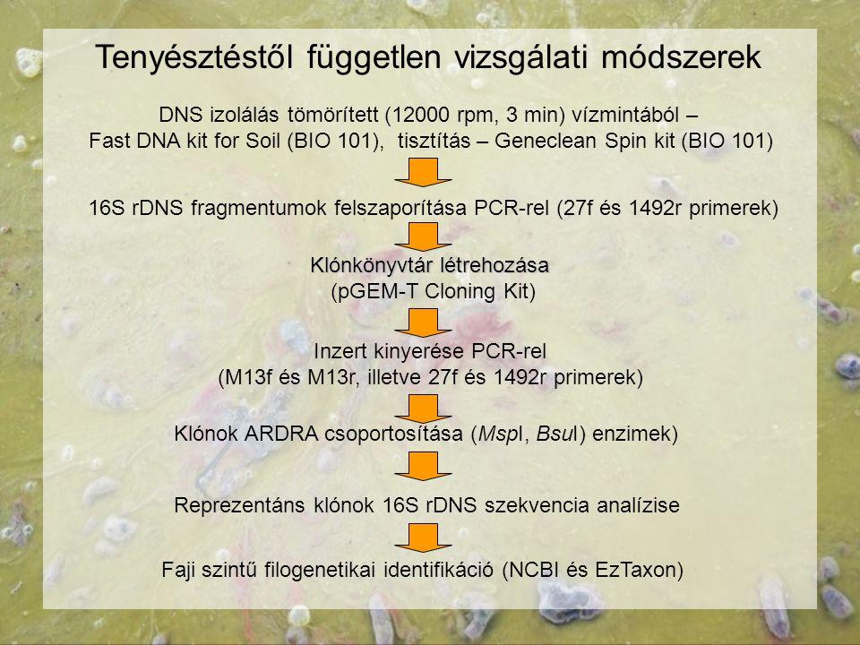 Tenyésztéstől független vizsgálati módszerek DNS izolálás tömörített (12000 rpm, 3 min) vízmintából – Fast DNA kit for Soil (BIO 101), tisztítás – Gen