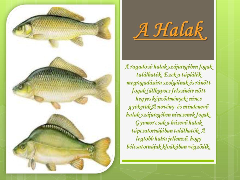A ragadozó halak szájüregében fogak találhatók. Ezek a táplálék megragadására szolgálnak és ránőtt fogak (állkapocs felszínére nőtt hegyes képződménye
