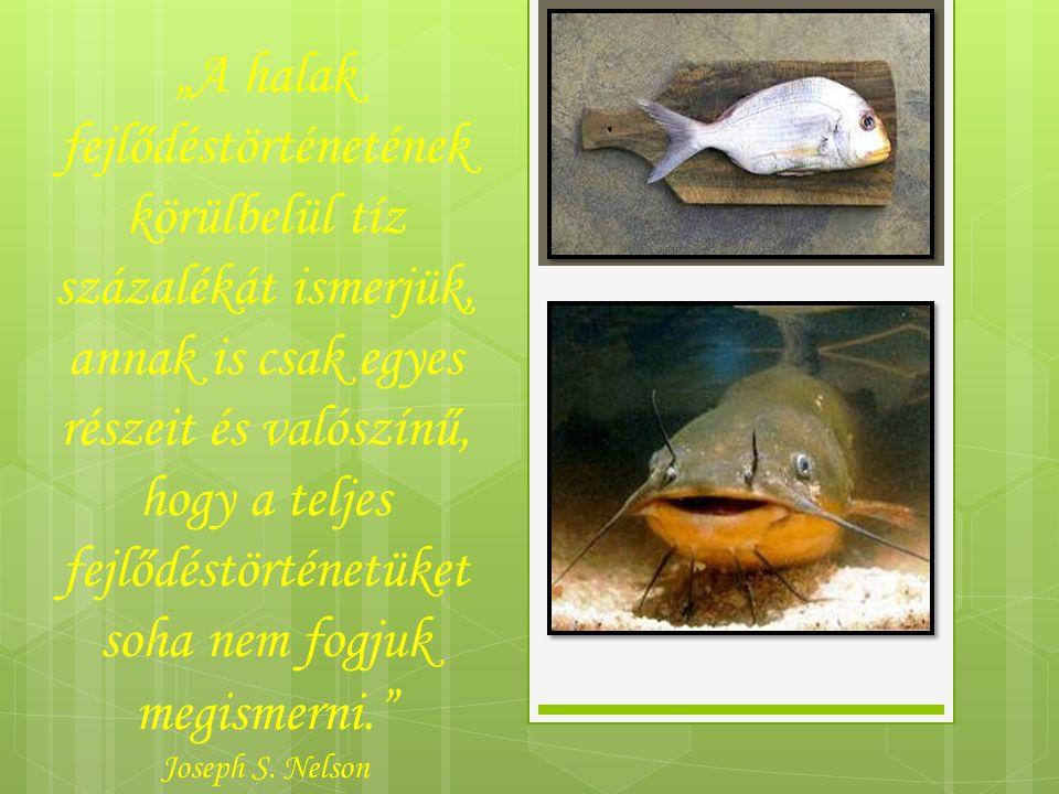 """""""A halak fejlődéstörténetének körülbelül tíz százalékát ismerjük, annak is csak egyes részeit és valószínű, hogy a teljes fejlődéstörténetüket soha nem fogjuk megismerni. Joseph S."""