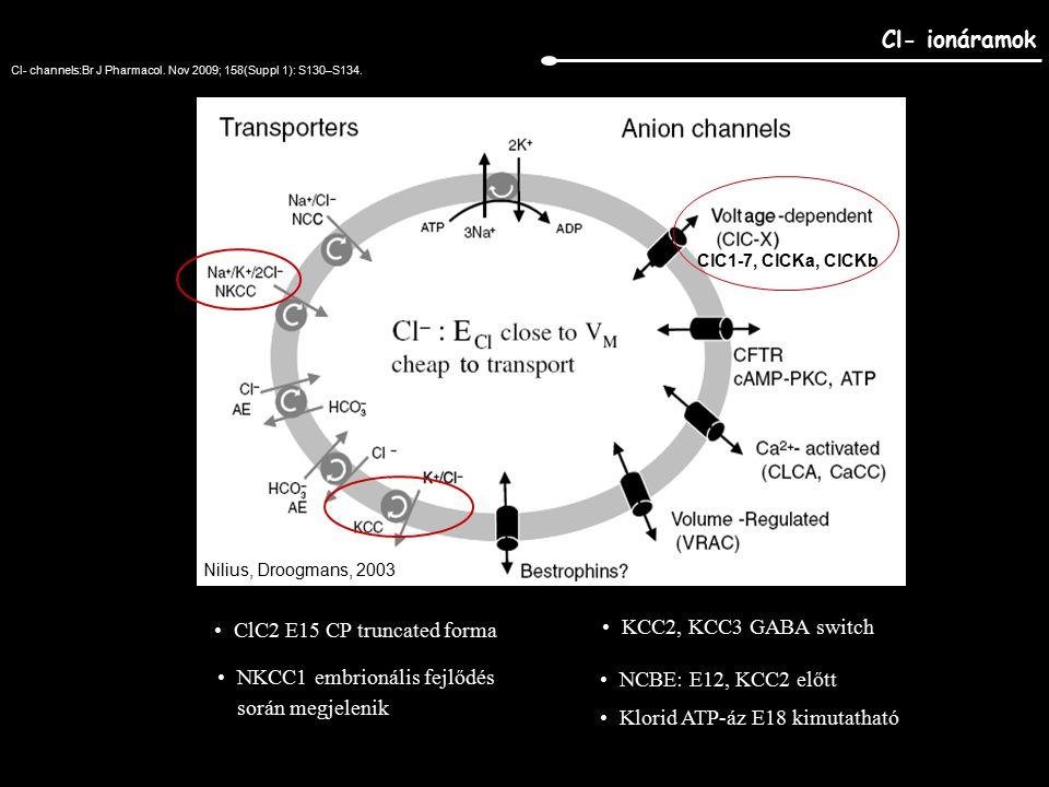 Cl- ionáramok Nilius, Droogmans, 2003 ClC1-7, ClCKa, ClCKb ClC2 E15 CP truncated forma NKCC1 embrionális fejlődés során megjelenik KCC2, KCC3 GABA switch NCBE: E12, KCC2 előtt Klorid ATP-áz E18 kimutatható Cl- channels:Br J Pharmacol.