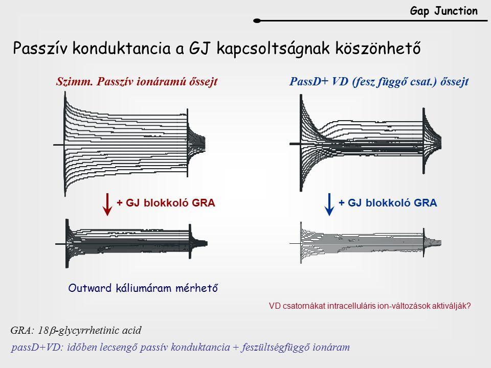 Passzív konduktancia a GJ kapcsoltságnak köszönhető + GJ blokkoló GRA Szimm.