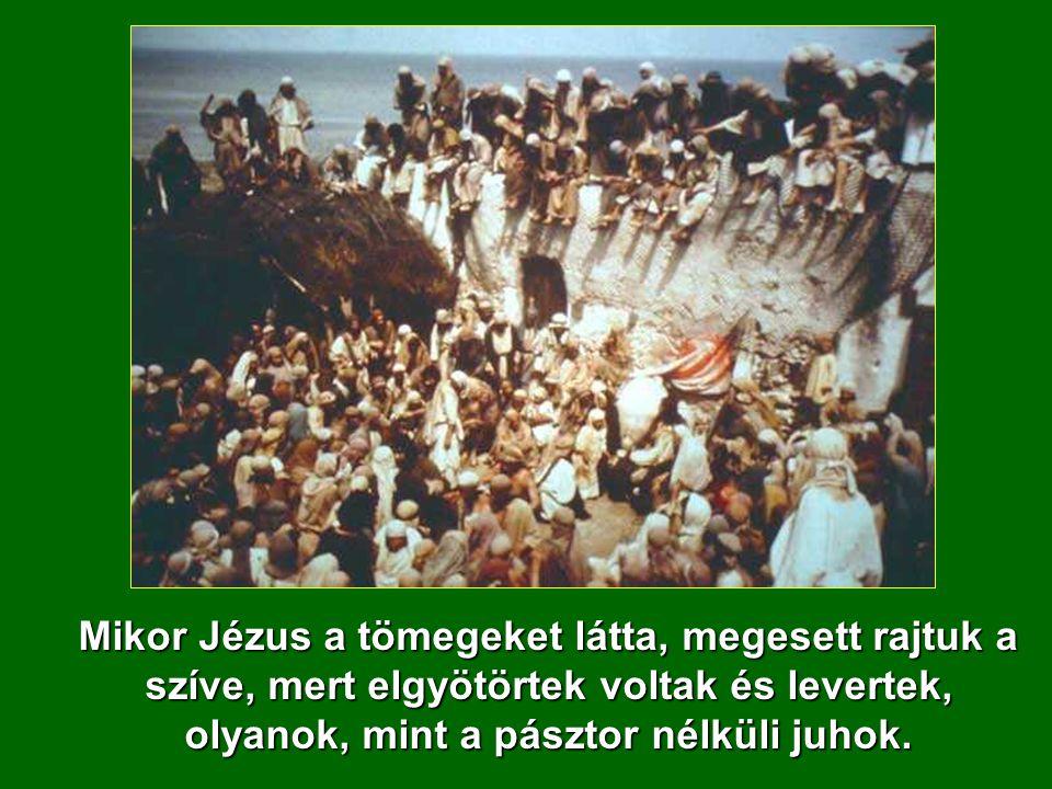 XI Évközi Vasárnap Á - év Máté 9,36-10,8