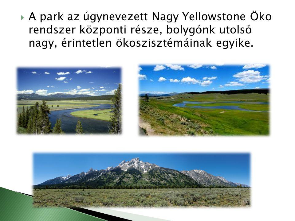  A park az úgynevezett Nagy Yellowstone Öko rendszer központi része, bolygónk utolsó nagy, érintetlen ökoszisztémáinak egyike.