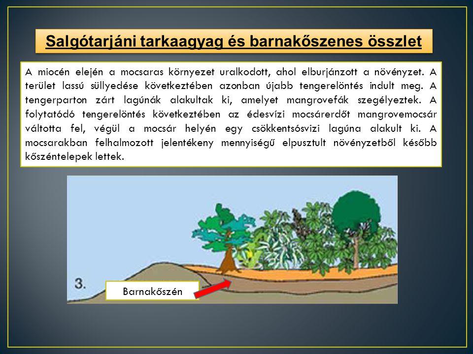 Salgótarjáni tarkaagyag és barnakőszenes összlet A miocén elején a mocsaras környezet uralkodott, ahol elburjánzott a növényzet. A terület lassú sülly