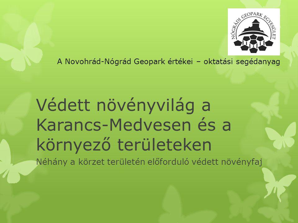 GOMBÁK A Geopark karancs-medvesi részéről a következő védett fajokat ismerjük: Krómsárga galambgomba: Hazánkban júliustól szeptemberig előforduló ritka faj.