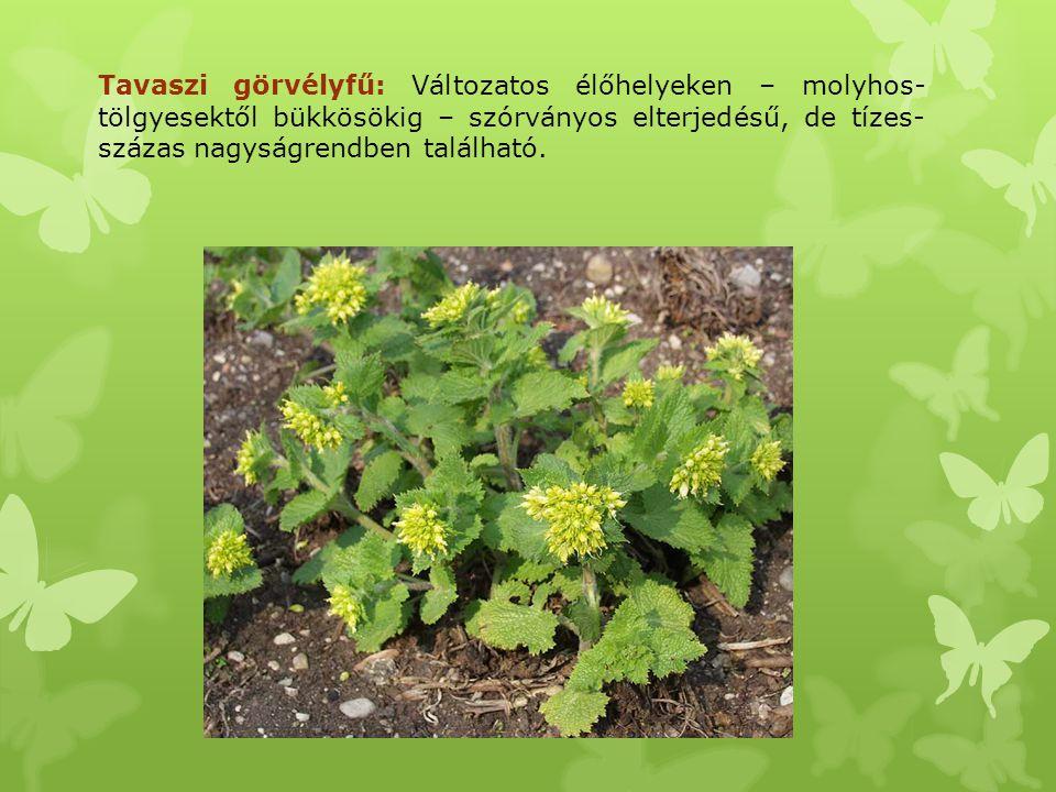 Tavaszi görvélyfű: Változatos élőhelyeken – molyhos- tölgyesektől bükkösökig – szórványos elterjedésű, de tízes- százas nagyságrendben található.