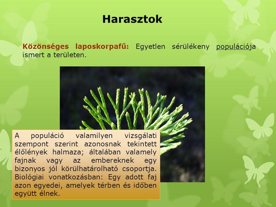 Fekete fodorka: Néhány töve mind a Medvesen, mind a Karancson megtalálható.