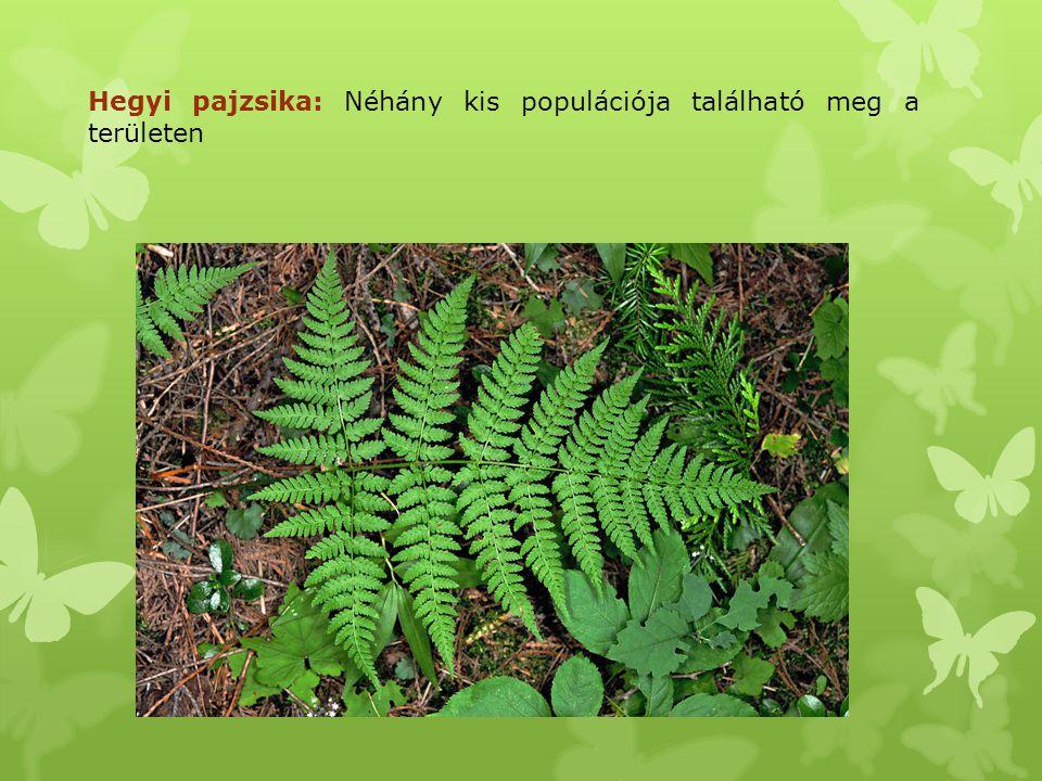 Leánykökörcsin: Sziklagyepben, molyhos-tölgyes bokorerdő nyílt részén; ritka faj. Zárvatermők