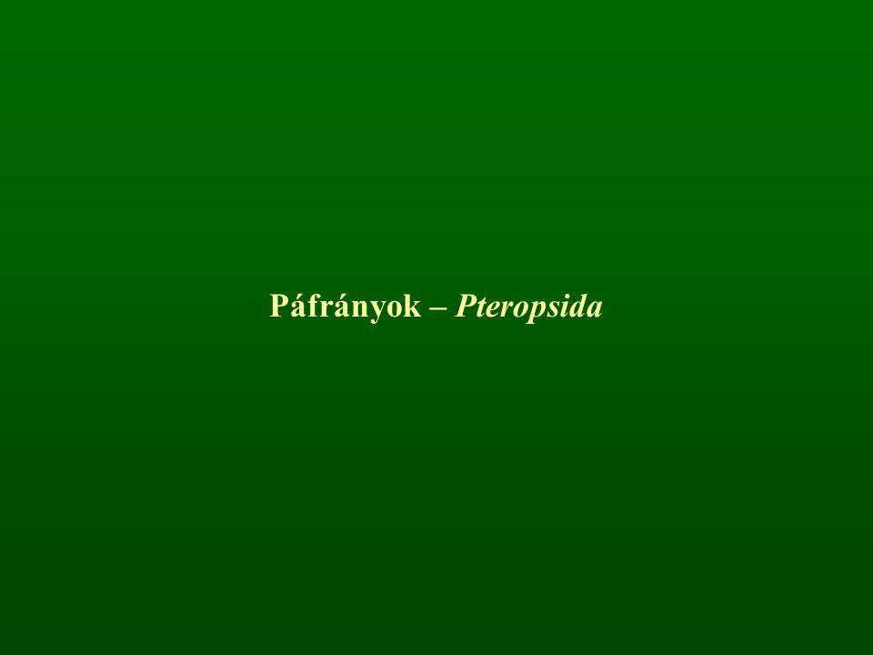 Páfrányok – Pteropsida