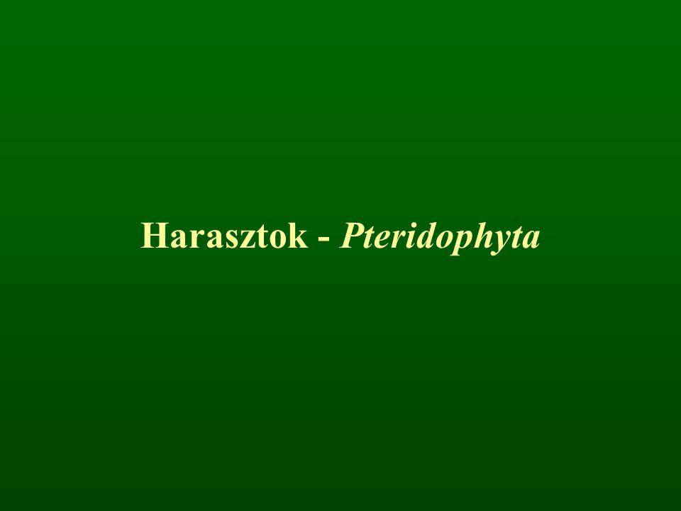 Harasztok - Pteridophyta