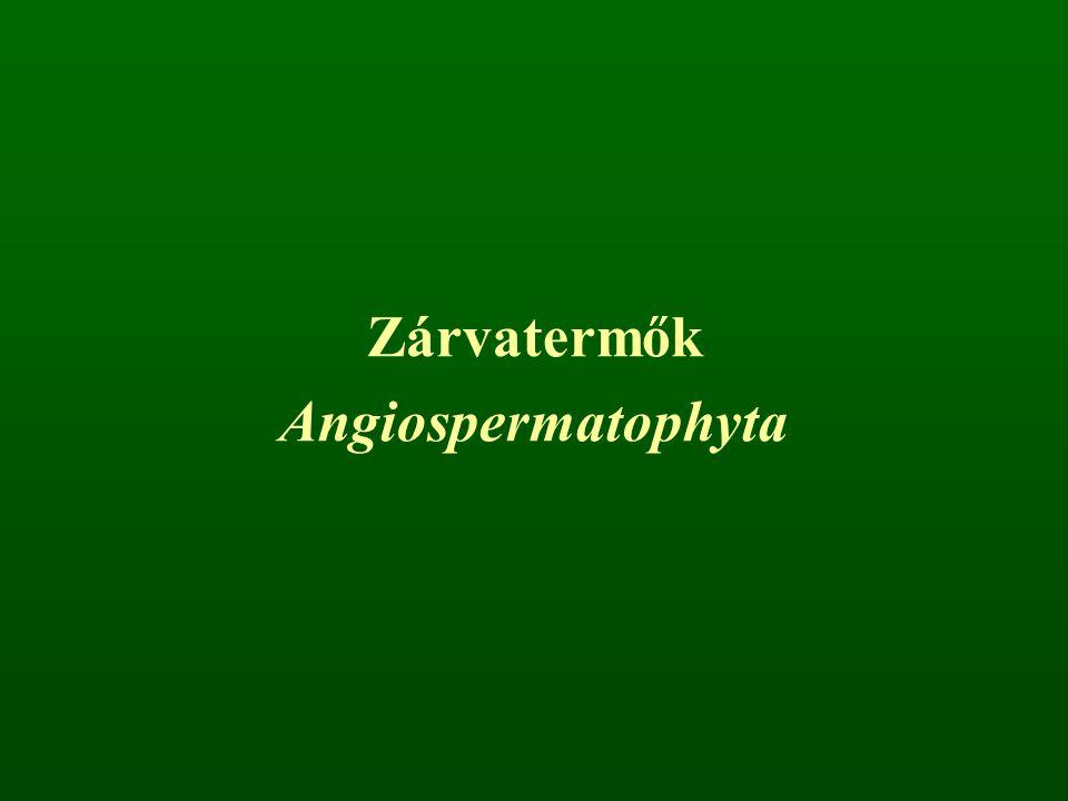 Zárvatermők Angiospermatophyta