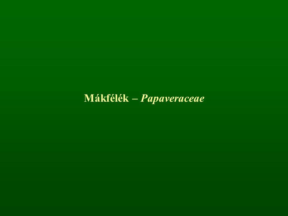 Mákfélék – Papaveraceae
