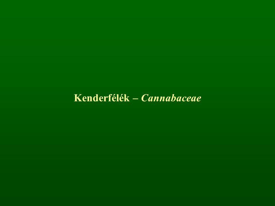 Kenderfélék – Cannabaceae