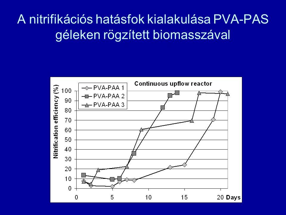 A nitrifikációs hatásfok kialakulása PVA-PAS géleken rögzített biomasszával
