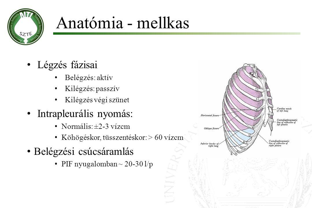 Anatómia - mellkas Légzés fázisai Belégzés: aktív Kilégzés: passzív Kilégzés végi szünet Intrapleurális nyomás: Normális: ±2-3 vízcm Köhögéskor, tüssz
