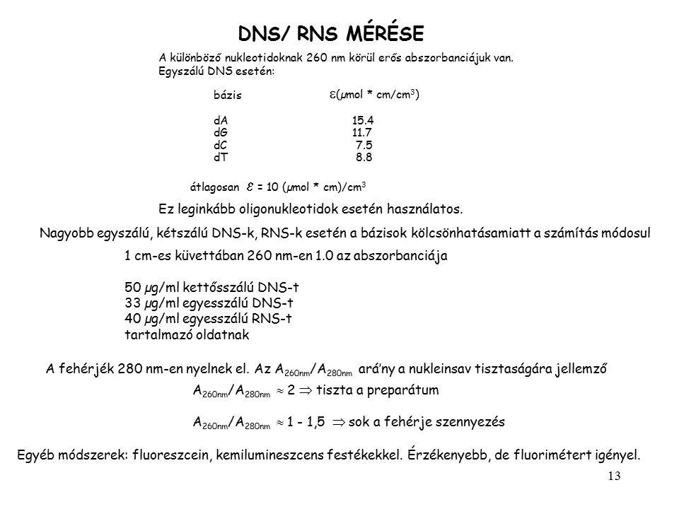 13 DNS/ RNS MÉRÉSE A különböző nukleotidoknak 260 nm körül erős abszorbanciájuk van. Egyszálú DNS esetén: bázis  (µmol * cm/cm 3 ) dA15.4 dG11.7 dC 7