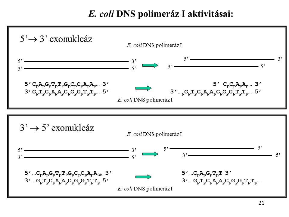 21 E. coli DNS polimeráz I aktivitásai: 5'  3' exonukleáz 5'5' 5'5' 3' 5'5' 5'5' 5'C p A p G p T p T P G p C p C p A p A p … 3' 3'G p T p C p A p A p