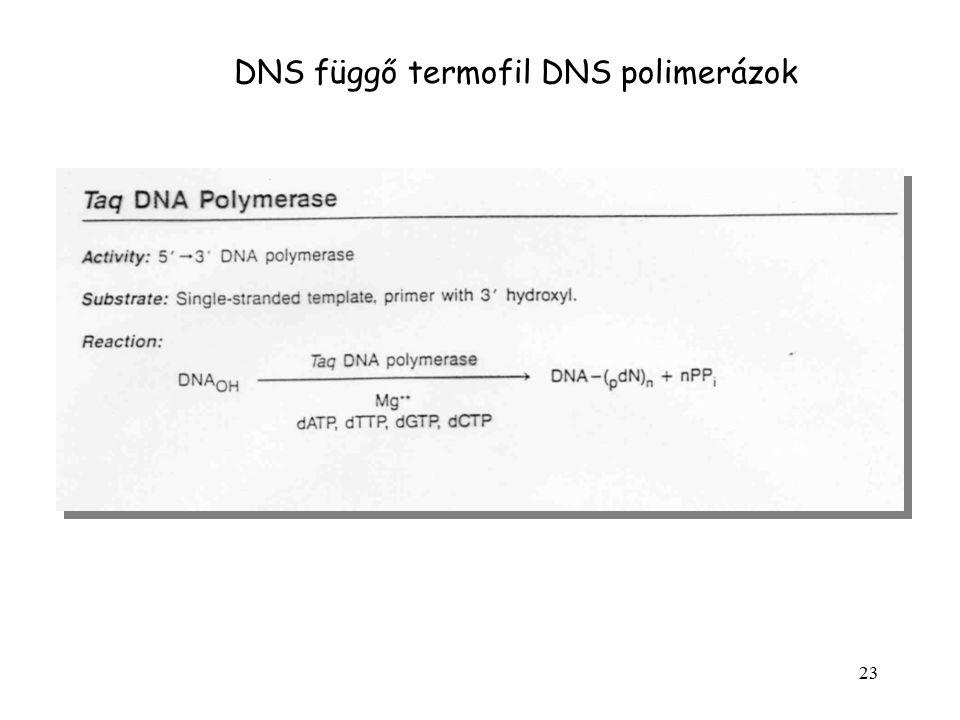 23 DNS függő termofil DNS polimerázok