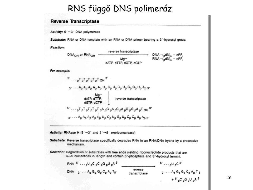 26 RNS függő DNS polimeráz