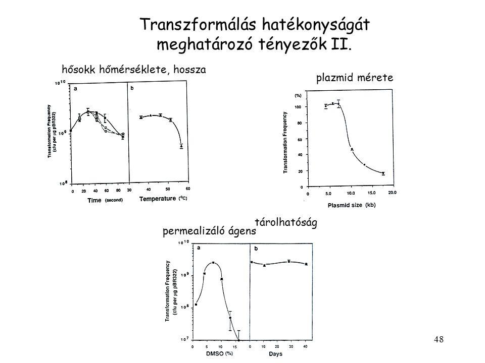 48 Transzformálás hatékonyságát meghatározó tényezők II. plazmid mérete hősokk hőmérséklete, hossza permealizáló ágens tárolhatóság