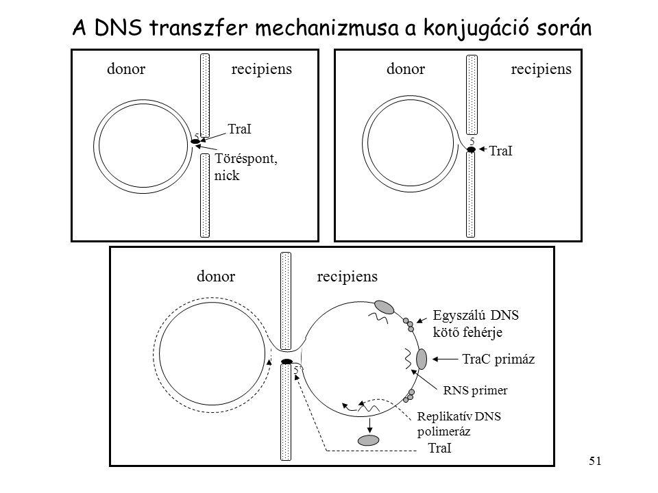 51 TraI Töréspont, nick 5'5' TraI 5'5' donorrecipiensdonorrecipiens TraI 5'5' donorrecipiens Egyszálú DNS kötő fehérje TraC primáz RNS primer Replikat