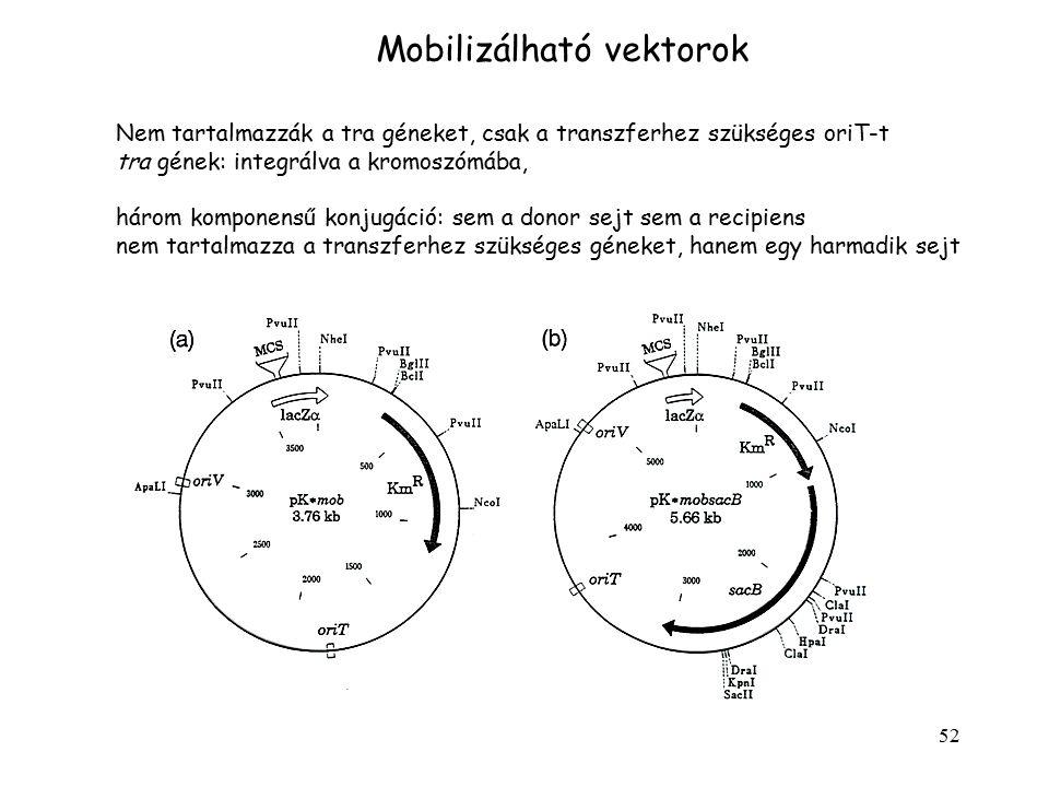 52 Mobilizálható vektorok Nem tartalmazzák a tra géneket, csak a transzferhez szükséges oriT-t tra gének: integrálva a kromoszómába, három komponensű