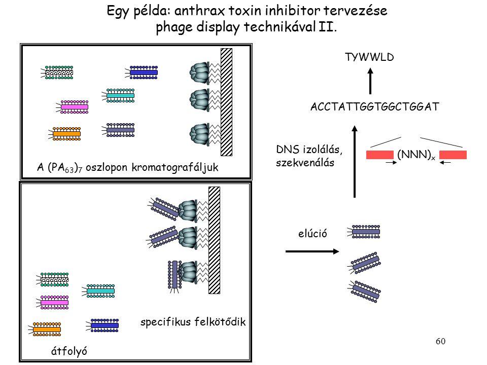 60 Egy példa: anthrax toxin inhibitor tervezése phage display technikával II. átfolyó specifikus felkötődik elúció DNS izolálás, szekvenálás (NNN) x A