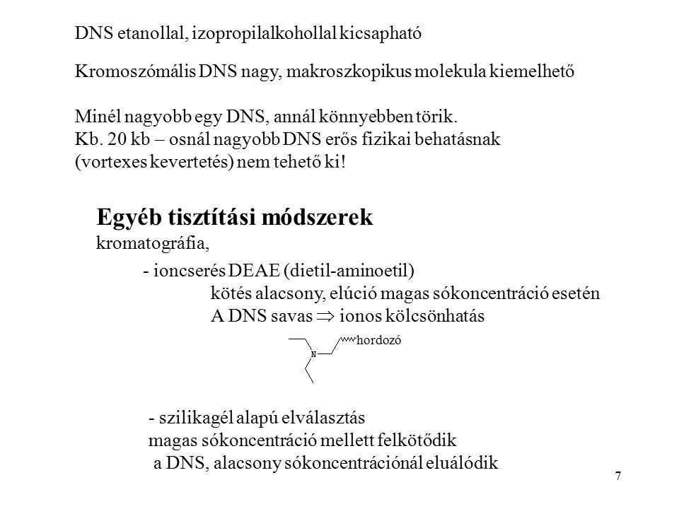 7 DNS etanollal, izopropilalkohollal kicsapható Kromoszómális DNS nagy, makroszkopikus molekula kiemelhető Minél nagyobb egy DNS, annál könnyebben tör