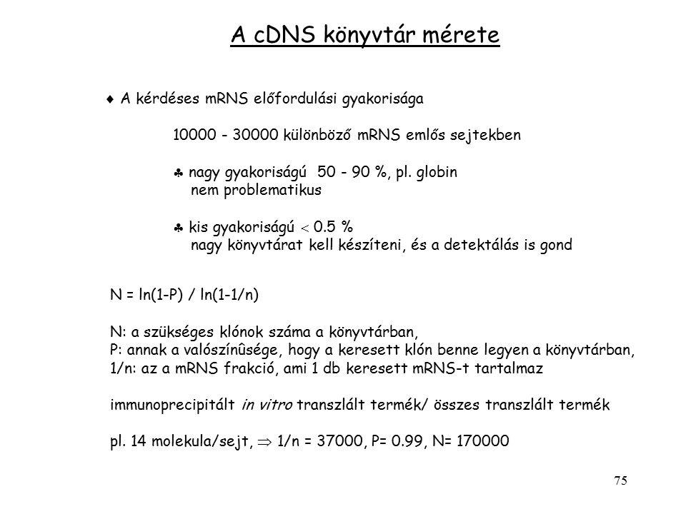 75  A kérdéses mRNS előfordulási gyakorisága 10000 - 30000 különböző mRNS emlős sejtekben  nagy gyakoriságú 50 - 90 %, pl. globin nem problematikus