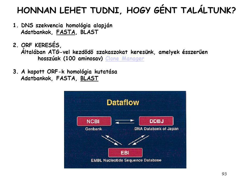 93 1. DNS szekvencia homológia alapján Adatbankok, FASTA, BLAST 2. ORF KERESÉS, Általában ATG-vel kezdődő szakaszokat keresünk, amelyek ésszerűen hoss