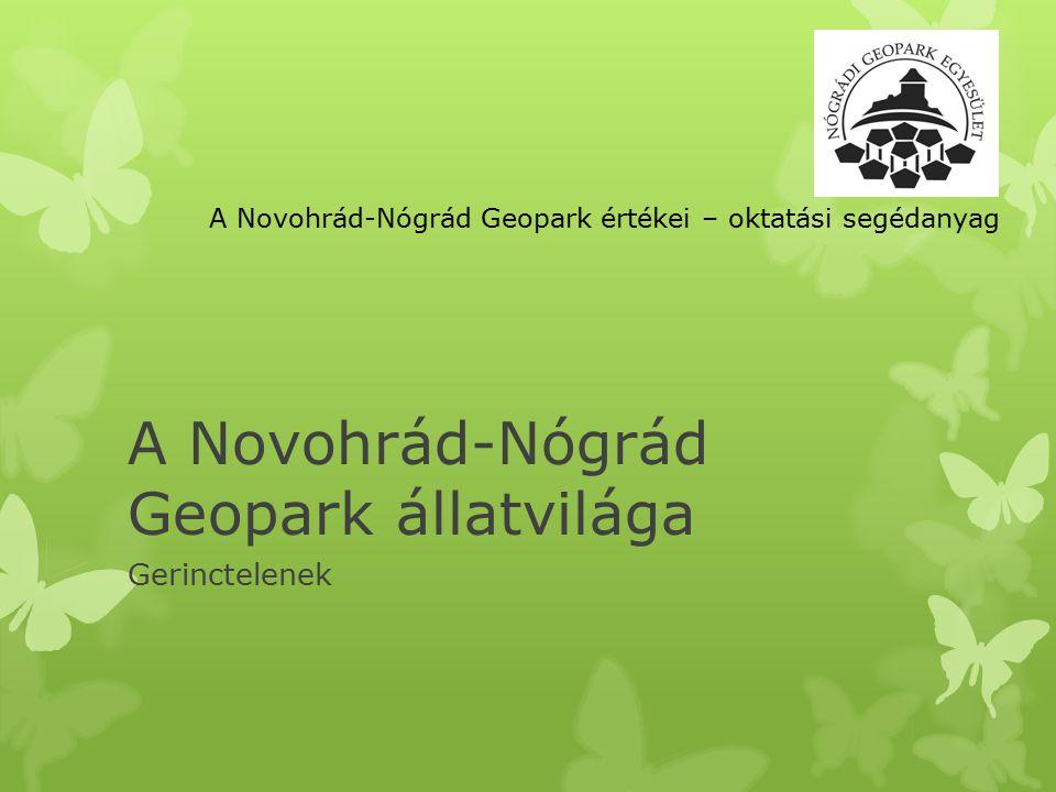 A Novohrád-Nógrád Geopark állatvilága Gerinctelenek A Novohrád-Nógrád Geopark értékei – oktatási segédanyag