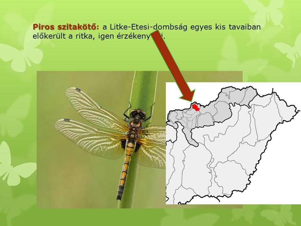 Piros szitakötő Piros szitakötő: a Litke-Etesi-dombság egyes kis tavaiban előkerült a ritka, igen érzékeny faj.