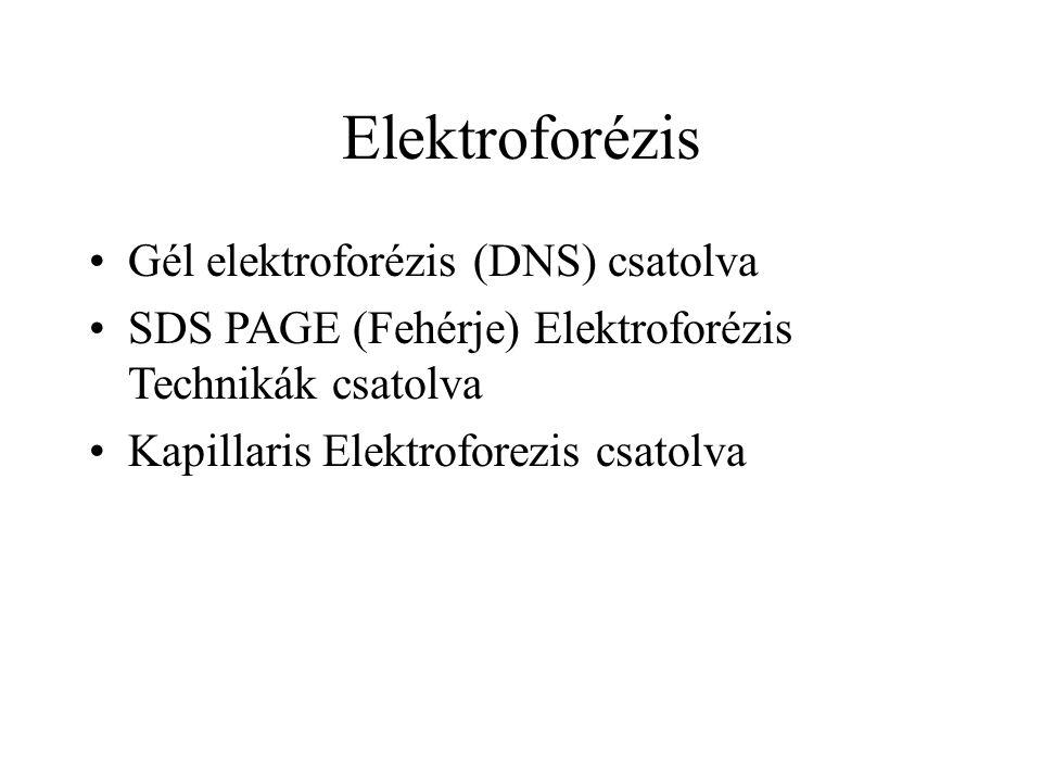 Elektroforézis Gél elektroforézis (DNS) csatolva SDS PAGE (Fehérje) Elektroforézis Technikák csatolva Kapillaris Elektroforezis csatolva