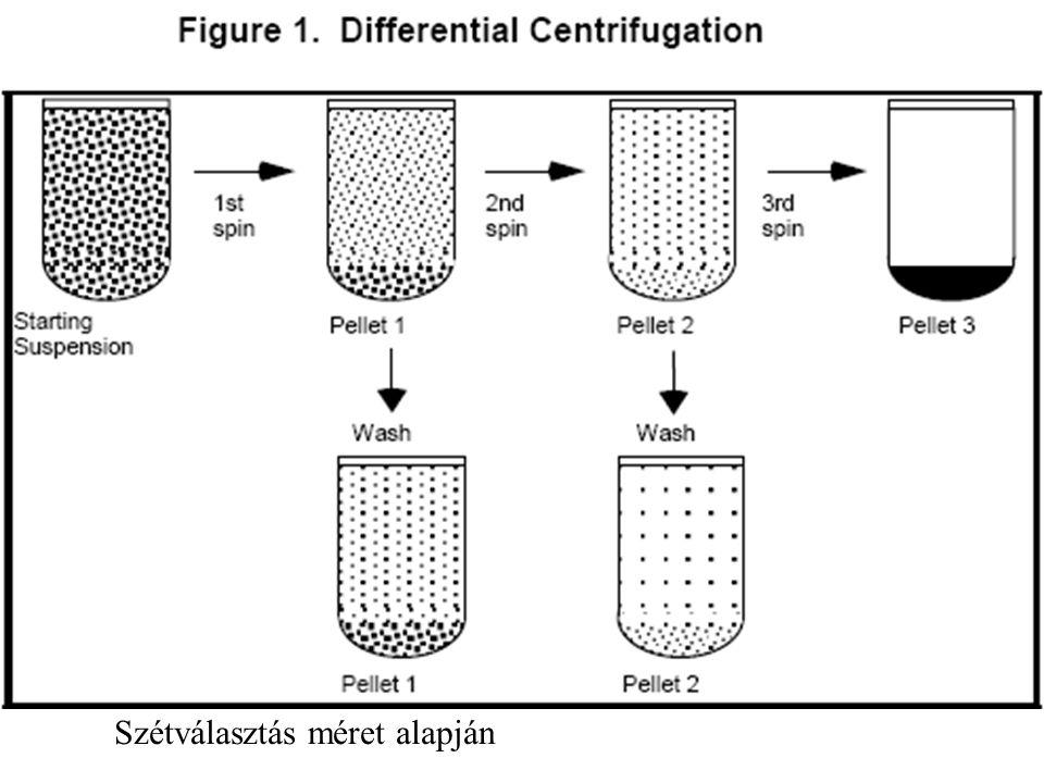 Density gradient centrifugation.