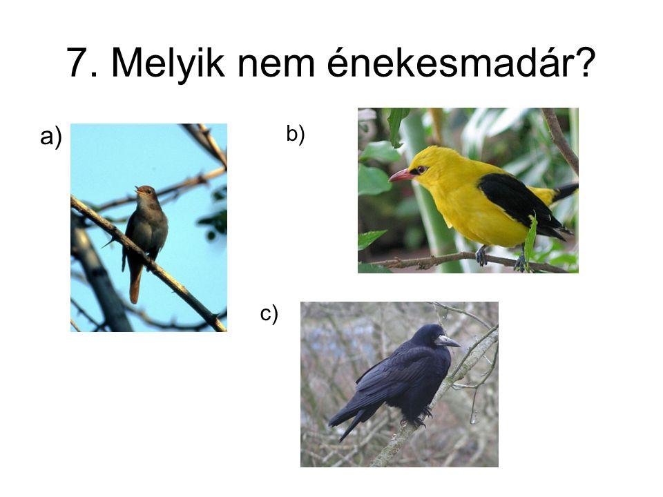 7. Melyik nem énekesmadár? a) b) c)