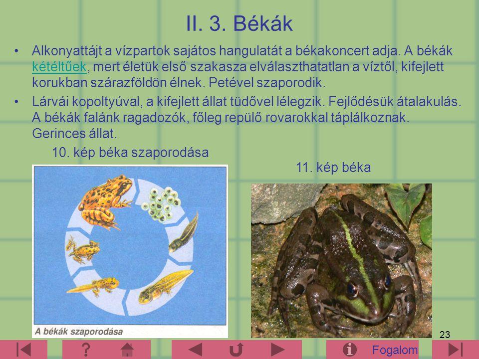 23 II.3. Békák Alkonyattájt a vízpartok sajátos hangulatát a békakoncert adja.