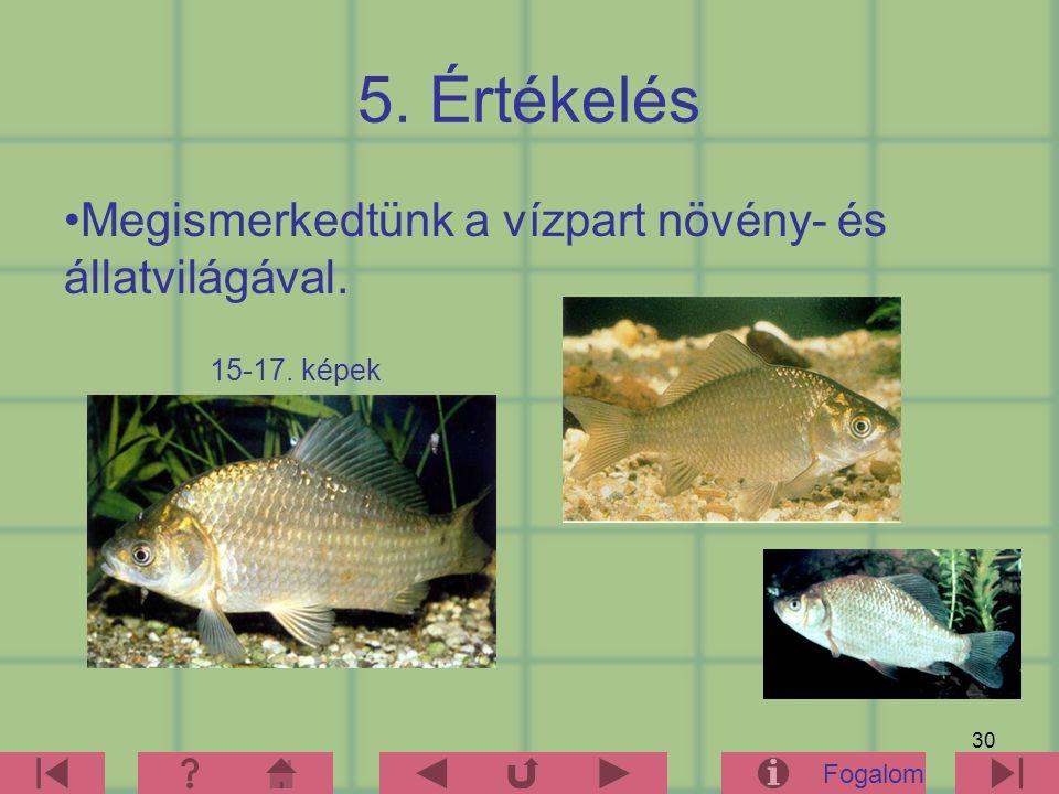 30 5. Értékelés Megismerkedtünk a vízpart növény- és állatvilágával. Fogalom 15-17. képek