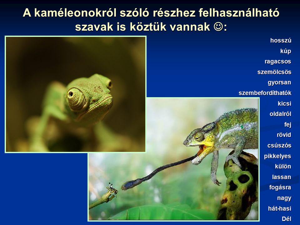 A füzetedbe írj egy kérdéssort a kígyók általános jellemzőiről szóló rész dőlttel szedett szavaira!