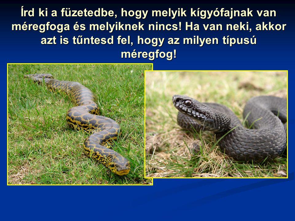 Írd ki a füzetedbe, hogy melyik kígyófajnak van méregfoga és melyiknek nincs! Ha van neki, akkor azt is tűntesd fel, hogy az milyen típusú méregfog!