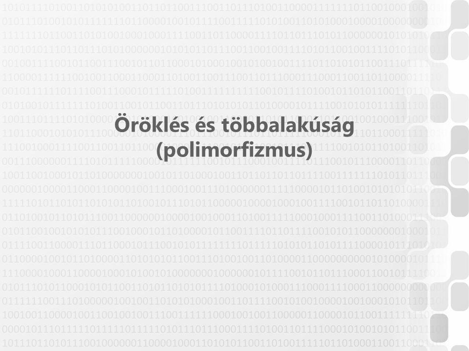 Öröklés és többalakúság (polimorfizmus)