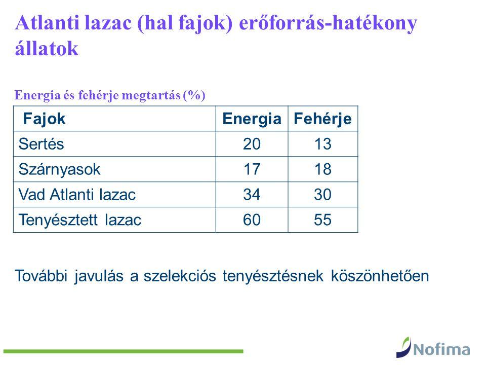 Atlanti lazac (hal fajok) erőforrás-hatékony állatok Energia és fehérje megtartás (%) FajokEnergiaFehérje Sertés2013 Szárnyasok1718 Vad Atlanti lazac3430 Tenyésztett lazac6055 További javulás a szelekciós tenyésztésnek köszönhetően