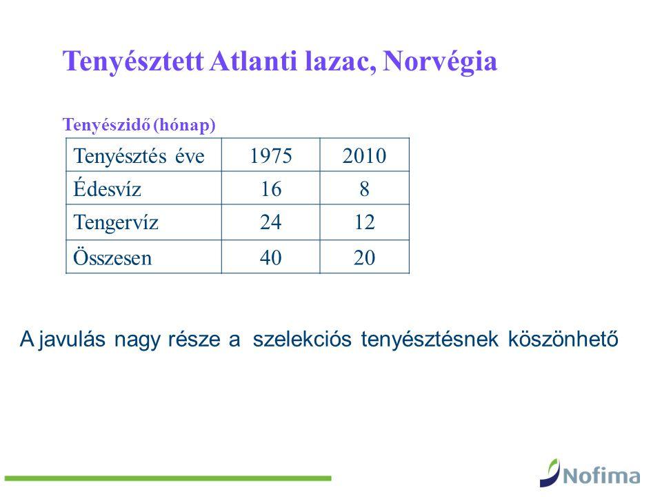Tenyésztett Atlanti lazac, Norvégia Tenyészidő (hónap) Tenyésztés éve19752010 Édesvíz168 Tengervíz2412 Összesen4020 A javulás nagy része a szelekciós tenyésztésnek köszönhető