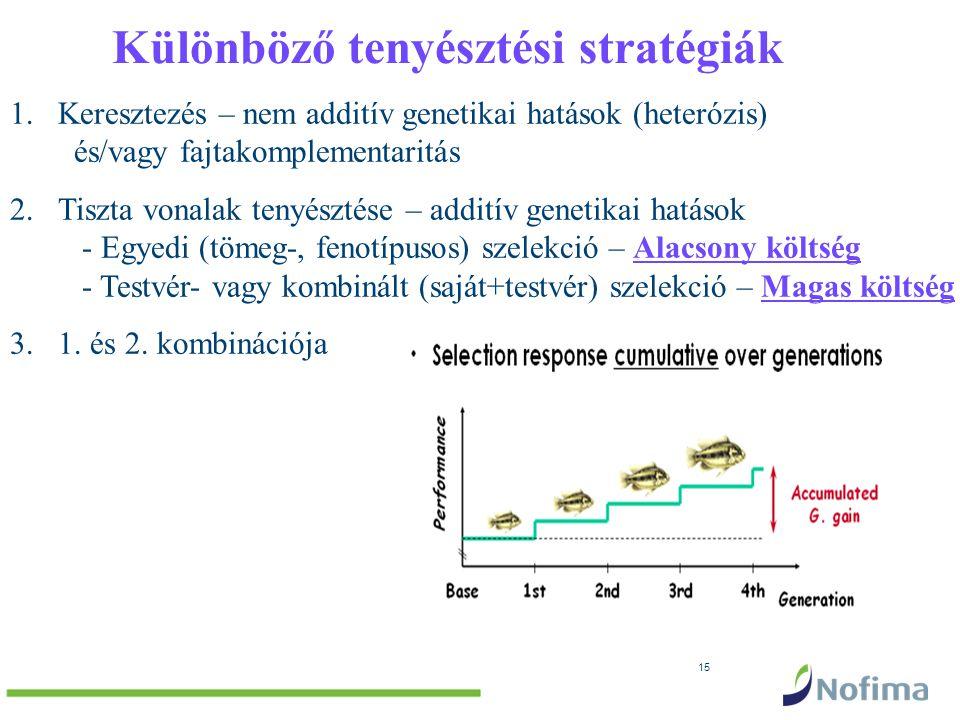 15 1.Keresztezés – nem additív genetikai hatások (heterózis) és/vagy fajtakomplementaritás 2.Tiszta vonalak tenyésztése – additív genetikai hatások - Egyedi (tömeg-, fenotípusos) szelekció – Alacsony költség - Testvér- vagy kombinált (saját+testvér) szelekció – Magas költség 3.1.