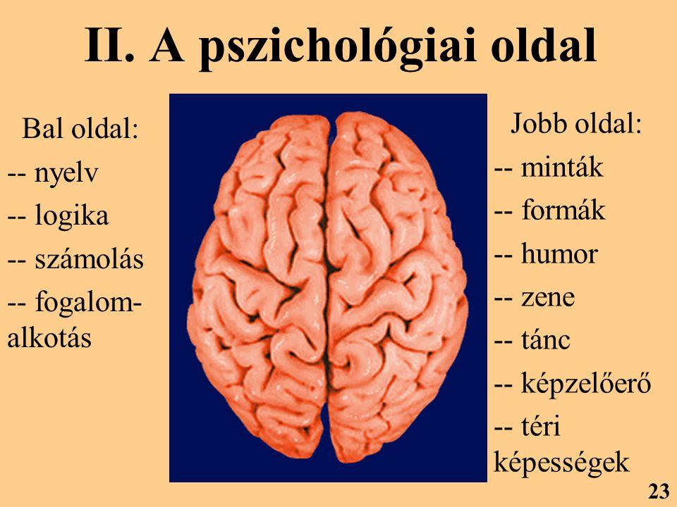 II. A pszichológiai oldal 23 Bal oldal: -- nyelv -- logika -- számolás -- fogalom- alkotás Jobb oldal: -- minták -- formák -- humor -- zene -- tánc --