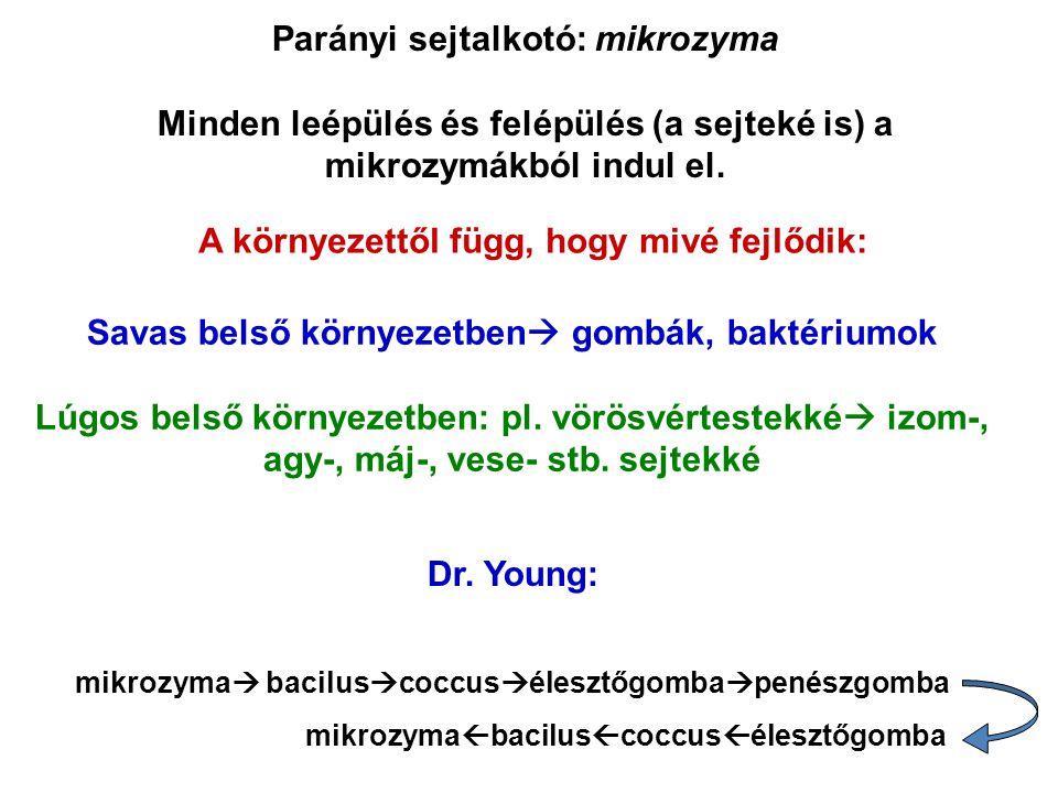 Parányi sejtalkotó: mikrozyma Minden leépülés és felépülés (a sejteké is) a mikrozymákból indul el. A környezettől függ, hogy mivé fejlődik: Savas bel