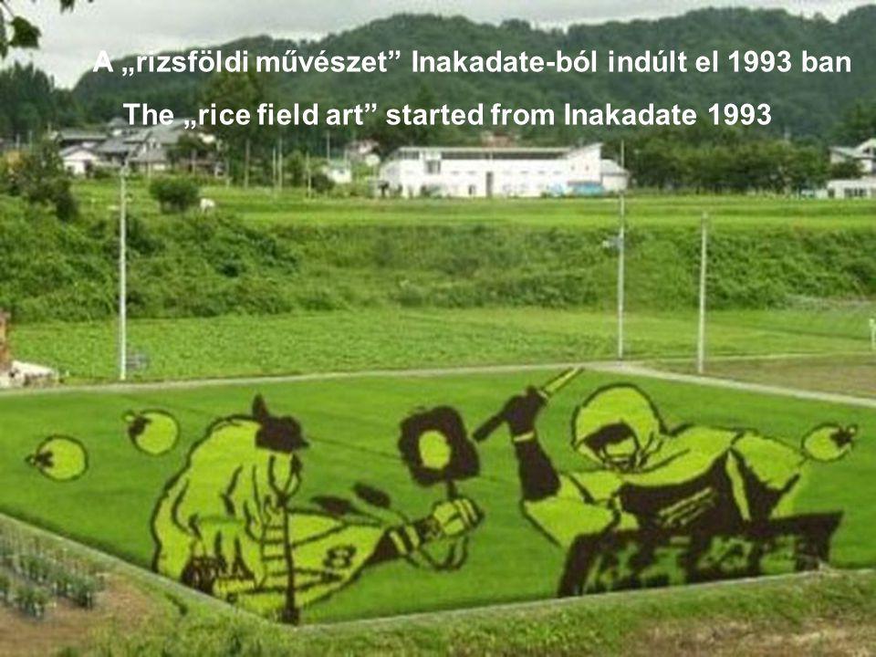 A különfajta rizspalántok növekedésük folyamán válik láthatóvá a kép Picture becomes visible during different rice plants growing