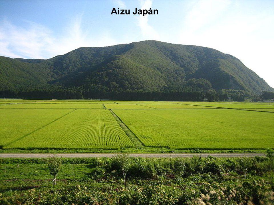 Rizsföldek Japánban Rice fields in Japan