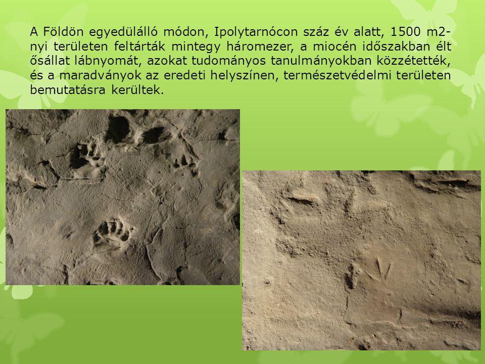 A Földön egyedülálló módon, Ipolytarnócon száz év alatt, 1500 m2- nyi területen feltárták mintegy háromezer, a miocén időszakban élt ősállat lábnyomát