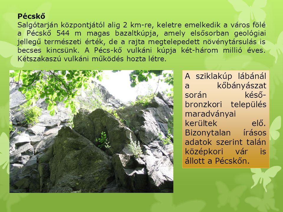Pécskő Salgótarján központjától alig 2 km-re, keletre emelkedik a város fölé a Pécskő 544 m magas bazaltkúpja, amely elsősorban geológiai jellegű term